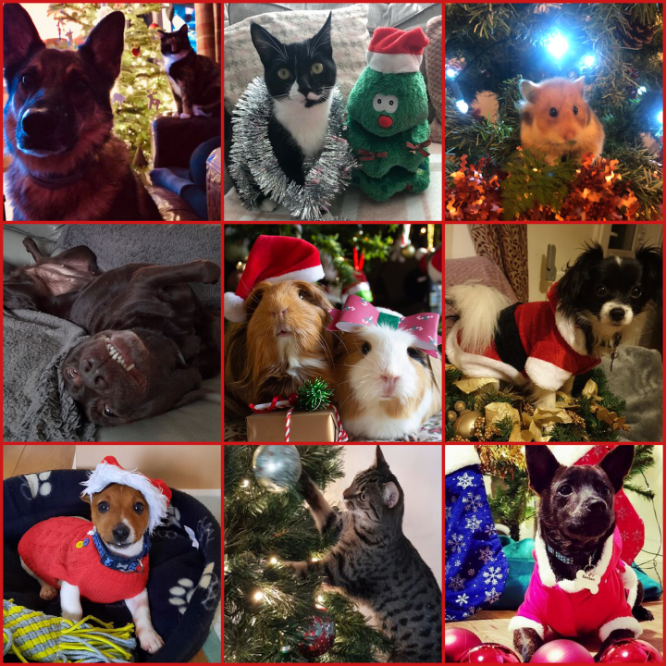 Name:  FestivePets.PNG Views: 408 Size:  1.20 MB